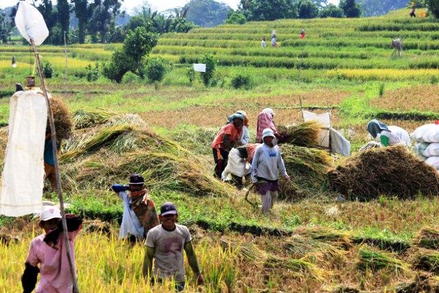 Kata Hulman Siantar Senantiasa Tingkatkan Hasil Produksi Pertanian